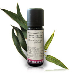 Essential oil Lemon eucalyptus BIO (Eucalyptus citriodora)