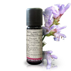 Essential oil Cineol sage BIO (Salvia lavandulifolia)