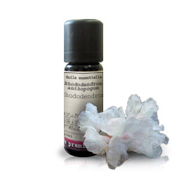 Essential oil Rhododendron (Rhododendron anthopogon)