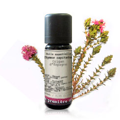 Essential oil Spanish oregano BIO (Thymus capitatus)